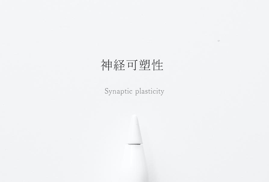 神経可塑性・シナプス可塑性